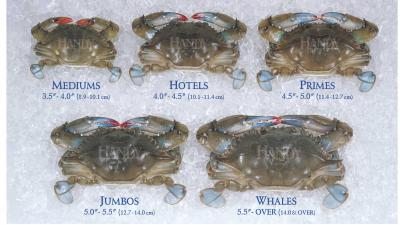 Handy Medium to Whales Sized Domestic Fresh Soft Crabs